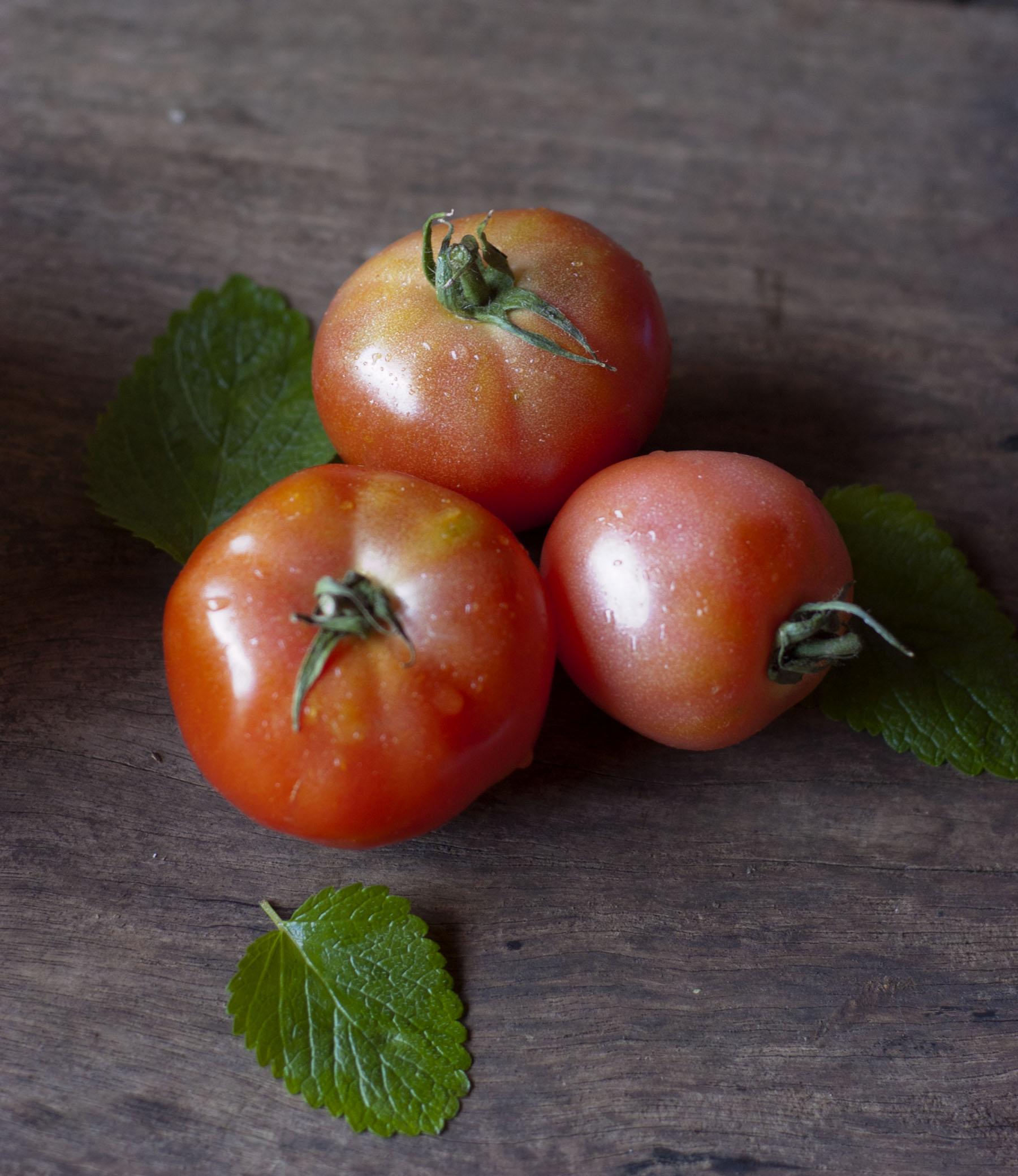 tomates8673