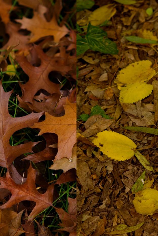 otoño8687 copia